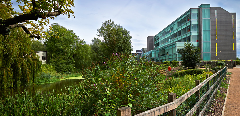 Chelmsford-campus-mill-pond-and-ashcroft_976x472 jpg